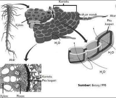 Mempengaruhi Pengangkutan Air