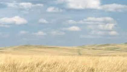 Padang Rumput stepa