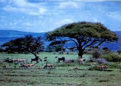 Padang rumput savanna