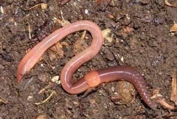 Peranan-Annelida