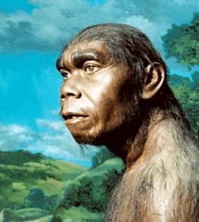 Manusia Purba Di Indonesia Pengertian Jenis Ciri Gambar