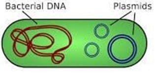 Plasmid dalam sel Bakteri