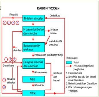 Proses Terjadinya Daur Ulang Nitrogen