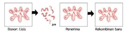 Reproduksi bakteri dengan jalan transformasi