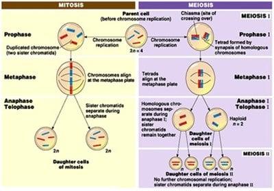 Siklus sel eukariotik terdiri dari empat fase