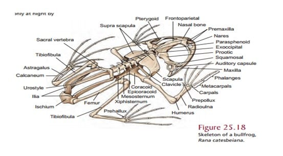 Sistem Rangka Amfibi