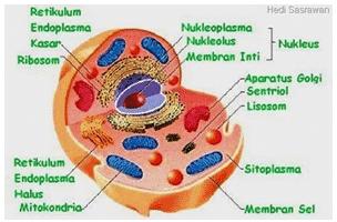 Sitoplasma
