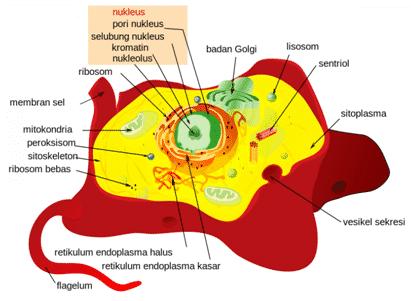 Struktur Dan Fungsi Sel Hewan