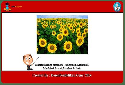 Tanaman Bunga Matahari Klasifikasi Morfologi Syarat Jenis