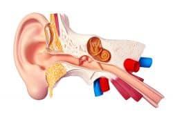 Telinga Bagian Dalam