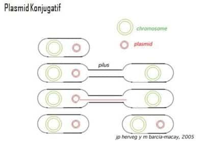 Transfer seksual plasmid