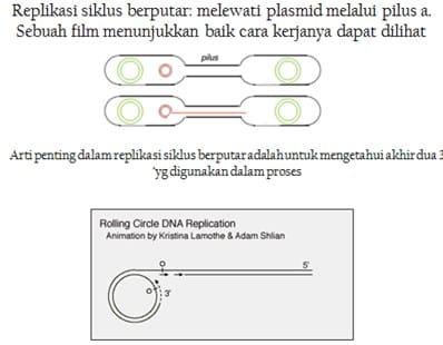 Transfer seksual plasmid1