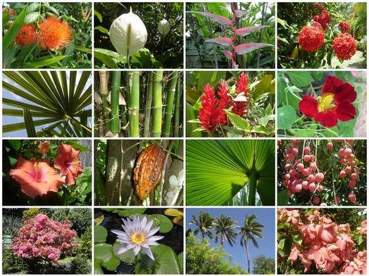 Tumbuhan Dikotil - Ciri, Klasifikasi, Struktur dan Contohnya