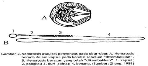 Ubur-ubur