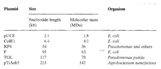 Ukuran-Plasmid