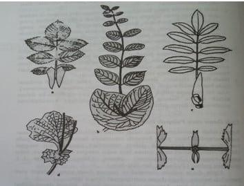 Upih-daun-atau-pelepah-daun