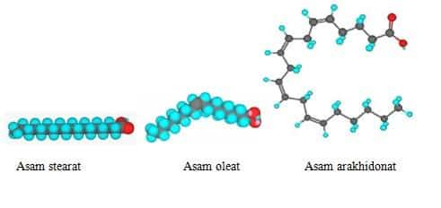 Beberapa contoh struktur asam lemak