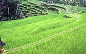 Ekosistem Darat Pengeertian Makalah Ciri Sawah Dan Gambar