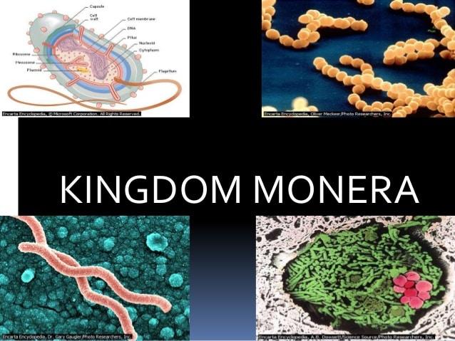 Kingdom Monera - Pengertian, Ciri, Ruang Lingkup dan Manfaat