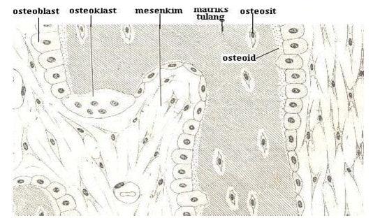 osteoid