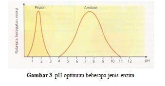 pH optimum beberapa jenis enzim.
