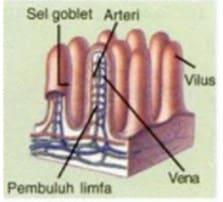 pembuluh limfa