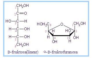 Fruktosa