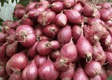 Bawang Merah (Allium cepa L)