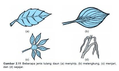 Bentuk tulang daun