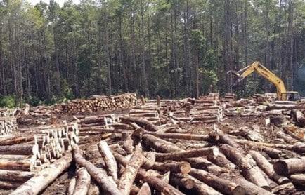 Dampak Negatif Penebangan Pohon Secara Liar