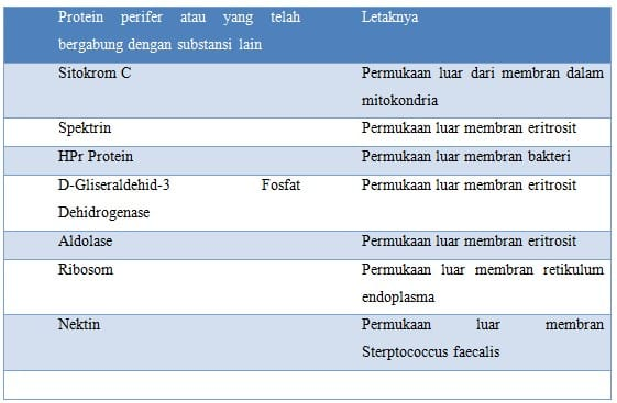 Protein-perifer