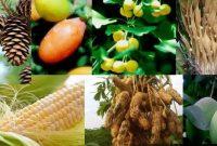 Tumbuhan Berbiji - Ciri, Struktur, Reproduksi dan Klasifikasi