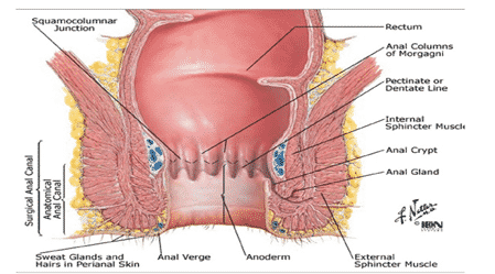 Anatomy-of-the-anal-canal