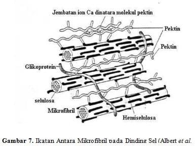 Ikatan Antara Mikrofibril pada Dinding Sel