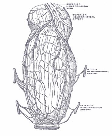 Kontinensia-anus