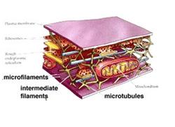 Mikrotubulus dan Mikrofilamen