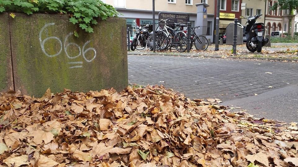 Sampah-Organik-Kering