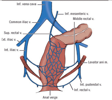 anal-verge
