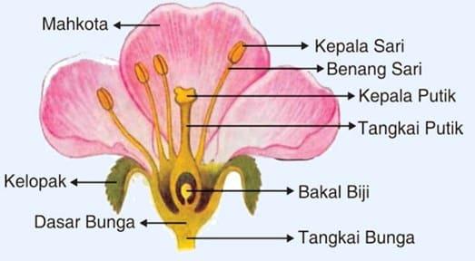 Bagian Bunga & Fungsinya