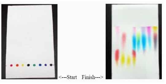 Contoh hasil kromatografi kertas pigmen