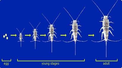 Metamorfosis Serangga