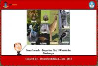 Fauna-Australis