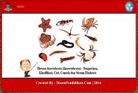 Hewan-Avertebrata-(Invertebrata)