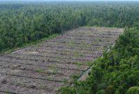 Hutan-Produksi