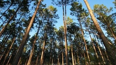 Pemanfaatan-Hutan-Produksi