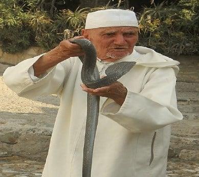 Seorang Kakek dan Seekor Ular