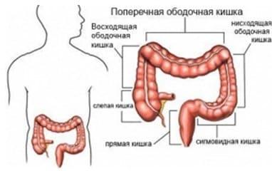 fitur-dari-struktur-dan-fungsi-usus