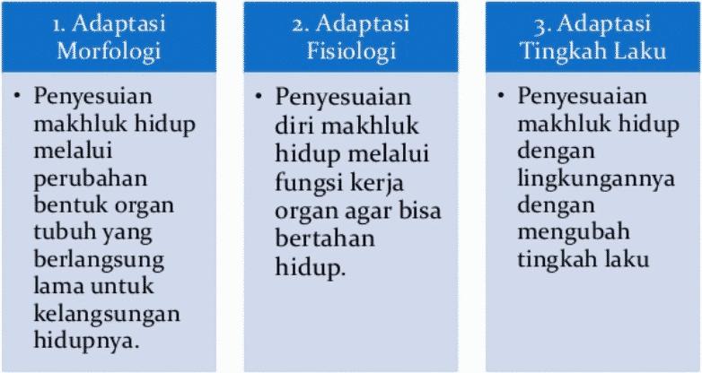 Adaptasi -Morfologi