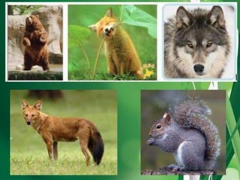 Fauna Hutan Lumut
