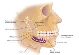 Nervus yang melewati mandibula